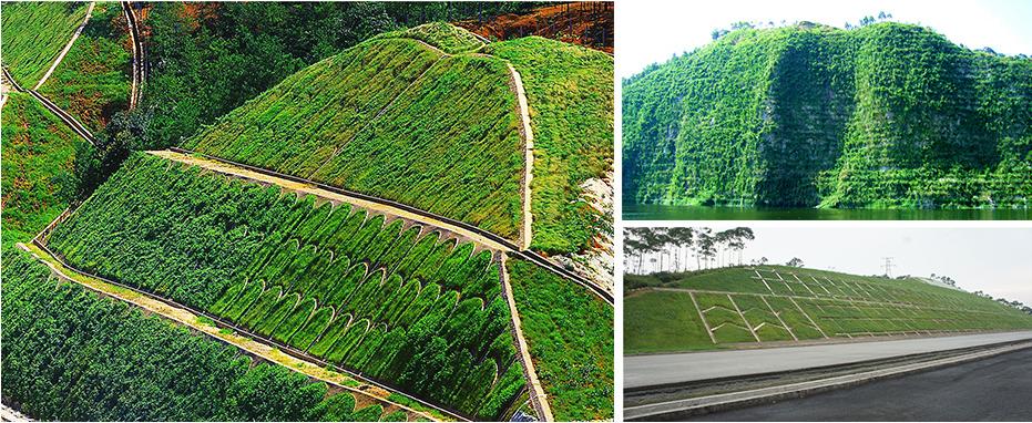 边坡生态绿化